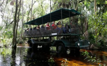 Forever Florida Eco Safaris