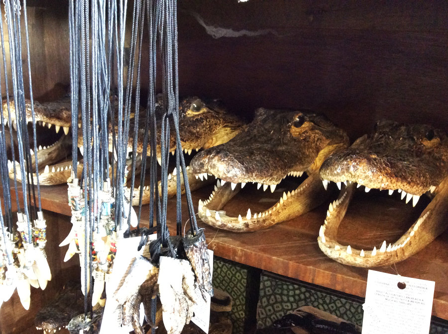 Alligator Souvenirs