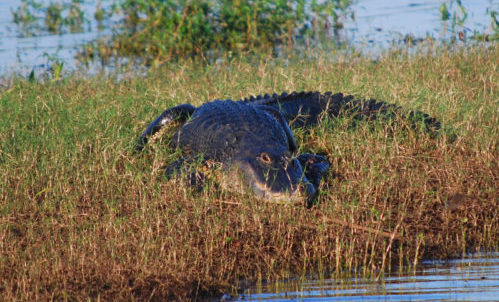 Spirit of the Swamp Airboat Tours