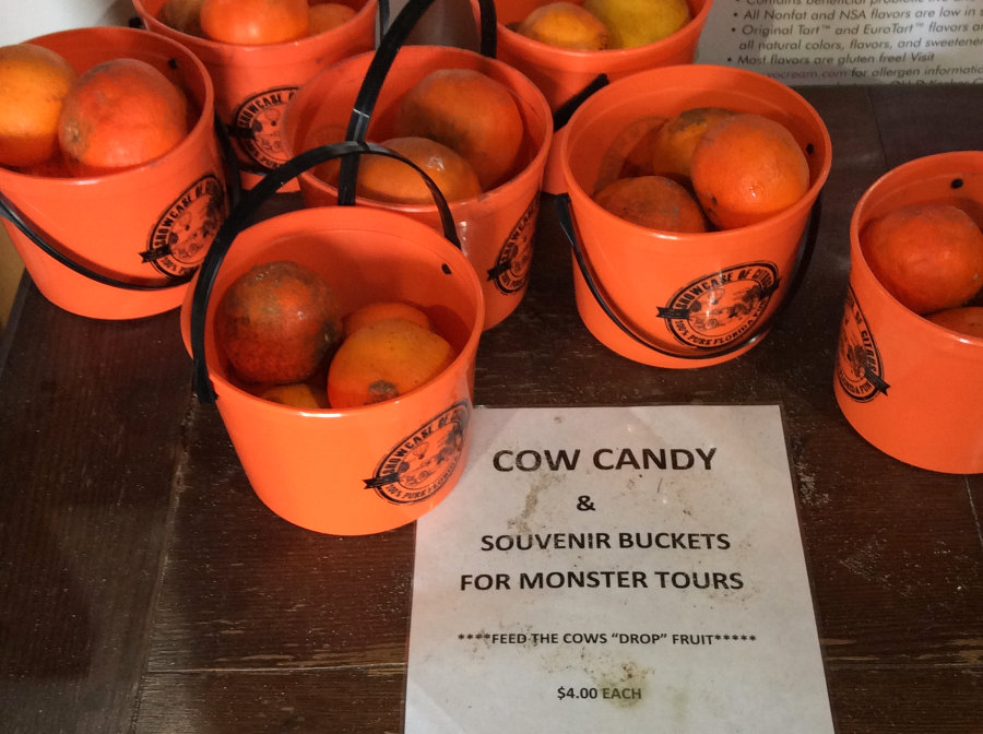 Cow Candy at Showcase of Citrus